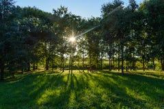 早晨在树之间的太阳光芒 库存图片