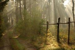 早晨在森林里。 免版税库存照片