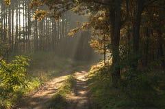早晨在森林里。 免版税库存图片