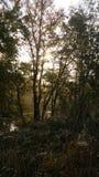早晨在森林里 免版税库存照片
