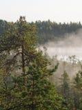早晨在森林里 免版税库存图片