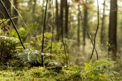 早晨在森林里 图库摄影