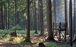 早晨在森林里 免版税图库摄影