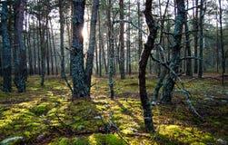 早晨在森林里 库存图片