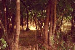 早晨在森林-红色版本 库存照片