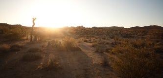 早晨在沙漠 免版税库存照片