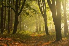 早晨在路的太阳光芒 库存照片