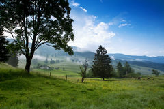早晨在阿尔卑斯,奥地利, Rauris 苹果覆盖花横向草甸本质星期日结构树 免版税库存照片