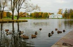 早晨在10月,步行通过凯瑟琳公园 免版税库存图片
