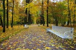 早晨在10月,步行通过凯瑟琳` s公园 免版税库存照片