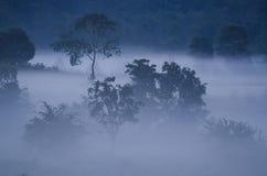 早晨多雨森林 免版税库存照片