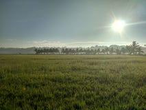早晨太阳亮光 库存照片