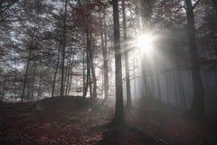 早晨太阳光芒通过一个黑暗的森林 图库摄影
