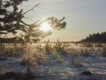 早晨太阳冬天在俄罗斯 免版税库存图片
