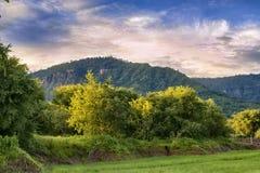 早晨太阳发出光线罗望子树农场 免版税库存照片