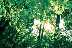 早晨太阳在森林里 免版税库存照片