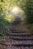 早晨太阳在秋天森林里发出光线发光 图库摄影