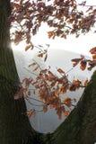 早晨太阳在秋天 免版税库存照片