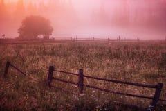 早晨太阳在雾山树发出光线 图库摄影