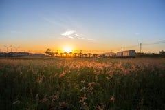 早晨太阳有美好的橙色光 免版税库存图片