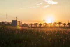 早晨太阳有美好的橙色光 免版税图库摄影