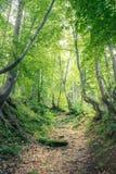 早晨太阳的不可思议的森林 神仙的森林在秋天 剧烈的场面和美丽如画的图片 美妙自然 库存图片