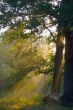 早晨太阳的光芒 免版税库存图片