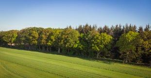 早晨太阳的森林! 免版税库存照片
