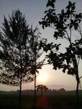 早晨太阳 库存图片