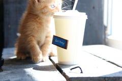 早晨好文本、咖啡和逗人喜爱的小猫 库存照片