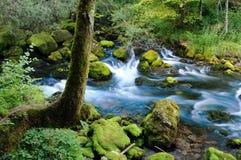 早晨斯洛文尼亚瀑布 免版税库存照片