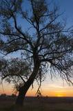 早晨日出横向 图库摄影
