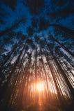 早晨森林在11月 免版税图库摄影