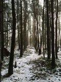 早晨森林地 库存照片