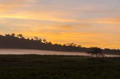 早晨森林 库存照片
