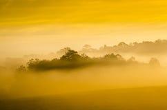 早晨森林 库存图片