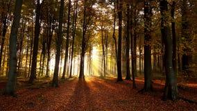 早晨步行在森林里 免版税库存图片