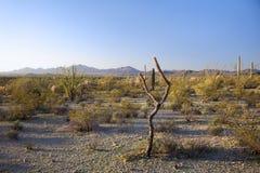 早晨沙漠风景,亚利桑那 库存图片