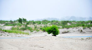 早晨海滩 免版税库存图片
