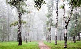 早晨深秋天雾的桦树树丛 免版税库存照片