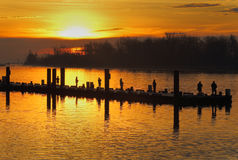 早晨渔, Steveston港口 免版税图库摄影