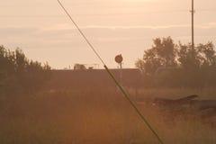 早晨火车 库存照片
