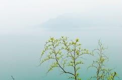 早晨狂放的枣遥远的山 库存图片