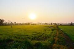 早晨米领域视图,清莱 免版税图库摄影