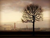 早晨结构树 库存图片