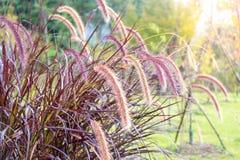 早晨聚集草、花和草与太阳光 图库摄影