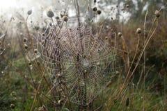 早晨薄雾和蜘蛛网 免版税图库摄影