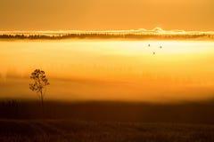 早晨薄雾和鸟 库存图片