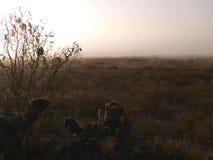 早晨薄雾在南得克萨斯 免版税库存图片