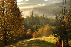 早晨薄雾在山森林地 库存照片